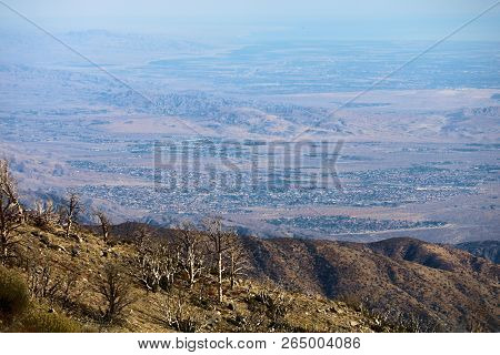 Charcoaled landscape including burnt chaparral shrubs caused from a wildfire on an arid landscape overlooking the desert and the Coachella Valley taken in the rural San Bernardino Mountains, CA poster