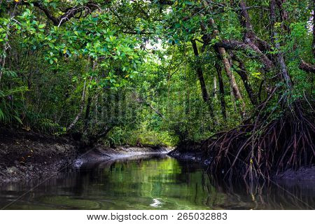 Canal and mangrove area in the Aru island rainforest , Maluku archipelago, Papua, Indonesia