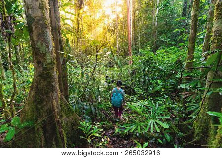 Woman trekking in the virgin rainforest of the Aru islands, Papua, Indonesia