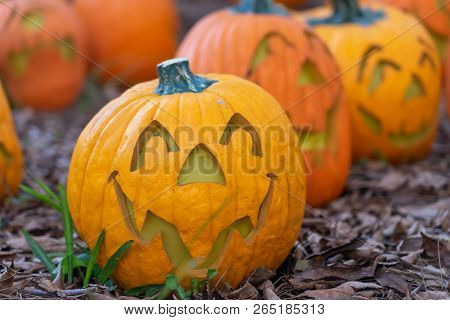 Smiling pumpkin sitting in pumpkin patch on fall leaves