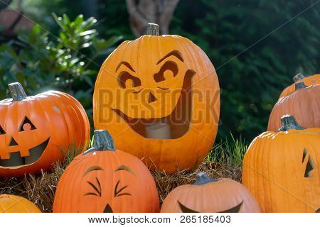 Halloween Pumpkin Sitting In Pumpkin Patch On Hay Bail