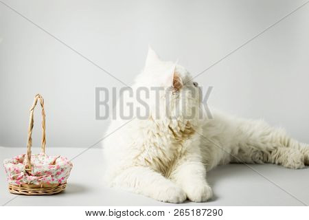 White Persian Cat With Wool That Frown And Wood Basket On White Background.