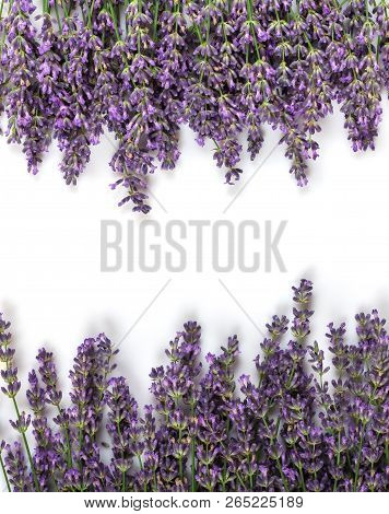 Top View. Branches Of Fresh Aromatic Lavender Isolated On A White Background