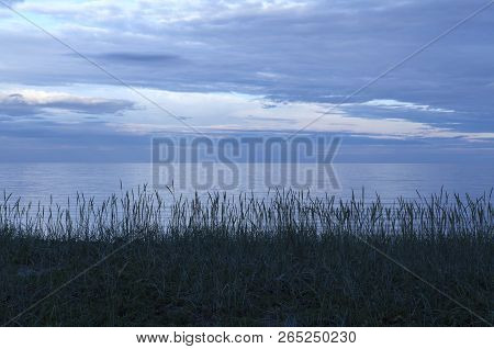 Calm Evening By The Sea. Reed This Side. Clouds And Horizon In The Distance.