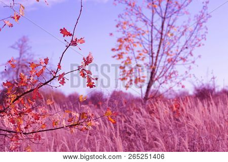 Autumn Red Nature Scene With Dry Leaves