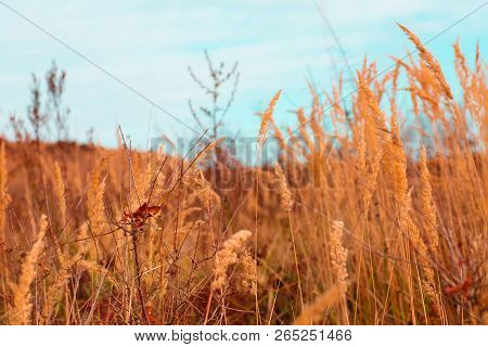 Autumn Gold And Brown Nature Grass Scene