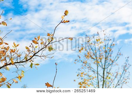 Romance Autumn Nature Scene With Yellow Leaves