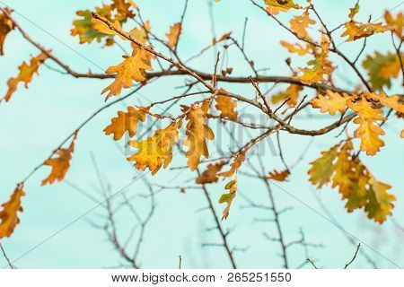 Autumn Brown Nature Scene With Yellow Leaves