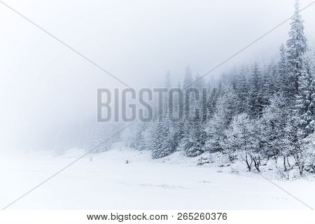 Winter White Forest Panorama With Snow In Tatra Mountains, Christmas Background. Panoramic Beautiful
