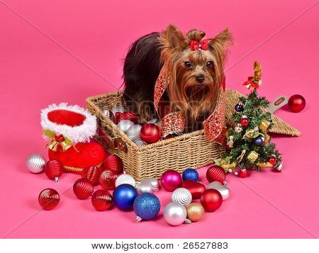 Christmas puppy with balls, new year tree and gift boot against pink background