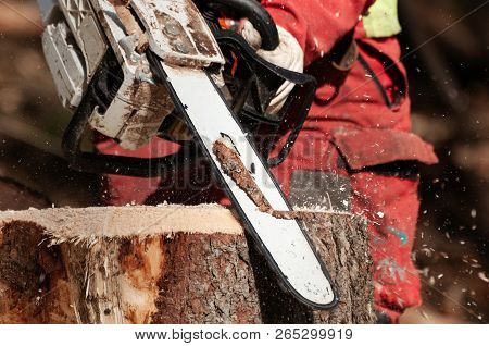Closeup Detail Of Forestry Worker Cleaning Up The Stump Of A Felled Spruce Tree With Chainsaw