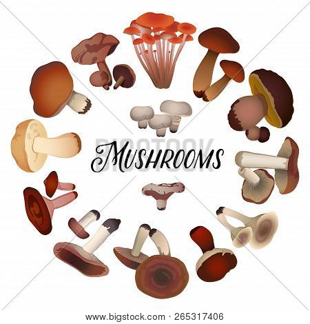 Various Mushrooms Laid Out In A Circle On A White Background