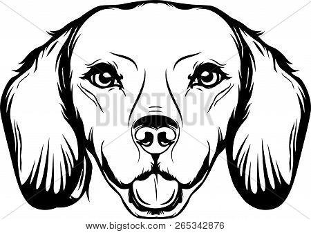 Animal Dog Dachshund Vector Photo Free Trial
