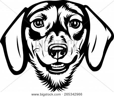 Animal Dog Dachshund Vector Photo Free Trial