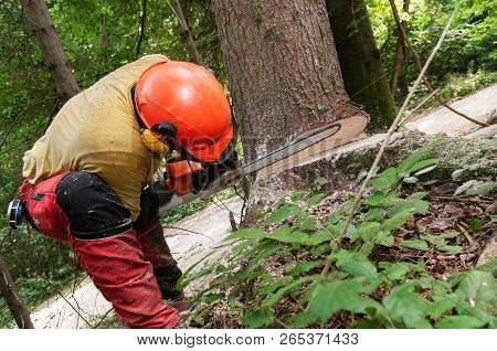 Forestry Worker In Protective Gear Using A Chainsaw To Cut Down A Spruce Tree, Low Angle