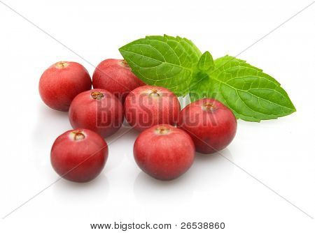 Berry of cranberry with leaves of mint.  Use it for a health and nutrition concept.
