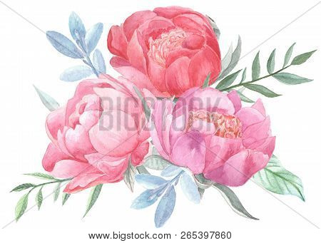Peonies Blooming And Leaves Isolated On White Background. Hand Drawn Watercolor Posy For Your Design