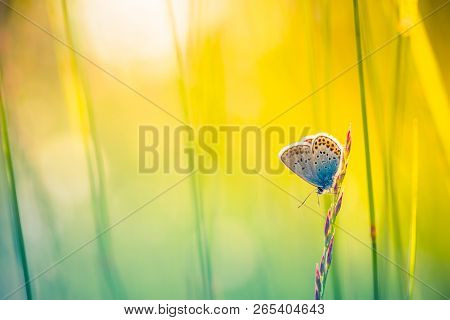 Nature Background Concept. Beautiful Summer Meadow Background. Inspirational Nature Closeup. Butterf