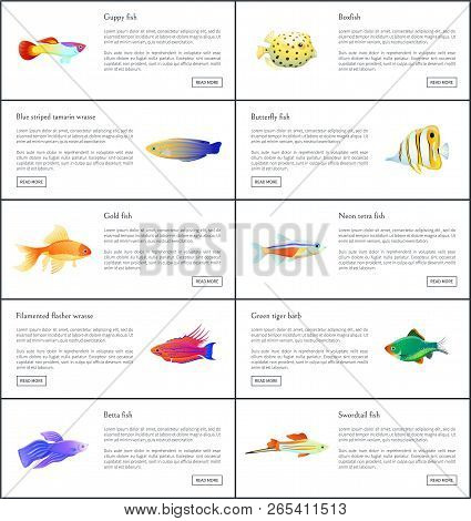 Marine Fishes Collection Color Vector Illustration Of Boxfish Guppy Golden And Neon Tetra With Color