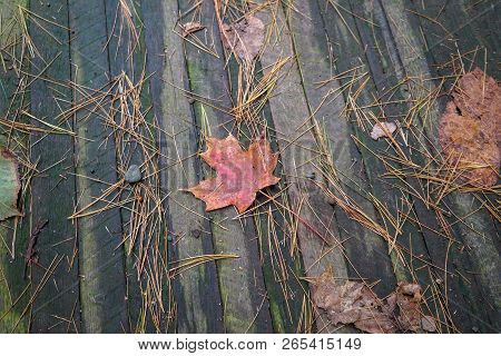 Colorful Red Leaf Laying On A Wood Bridge In A Park In Autumn