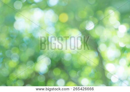 Leaves Green Blurred Background