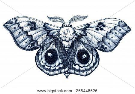 Beautiful Butterfly Tattoo. Antherina Suraka. Madagascar Bullseye. Traditional Black Dot Style Ink.