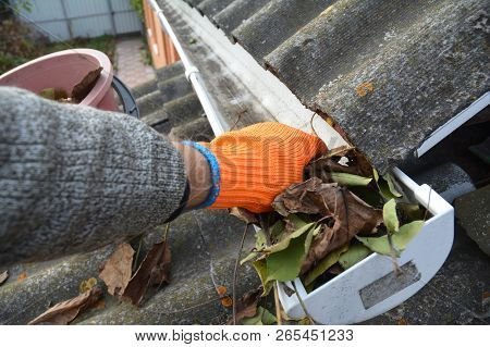 Rain Gutter Cleaning From Leaves In Autumn With Hand. Roof Gutter Cleaning Gutter Cleaning.