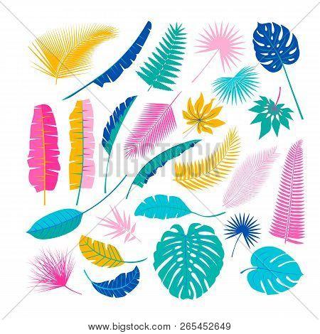 Tropical Plants, Leafs. Summertime Nature Objects. Jungle, Hawaii, Tropics. Flat Design, Modern Tren