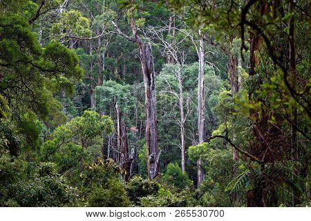 Australia - Dandenong Ranges, Dandenongs Are A Set Of Low Mountain Ranges, Mount Dandenong, East Of