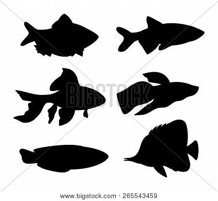 Aquarium Fish Silhouette Set. Goldfish And Green Tiger Fish, Butterfly Fish Blue Long Wrasse. Differ