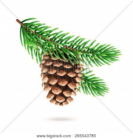 Realistic Pine Cone At Fir Tree Branch Or 3d Strobilus At Pine-tree Twig. Spruce With Evergreen Seed