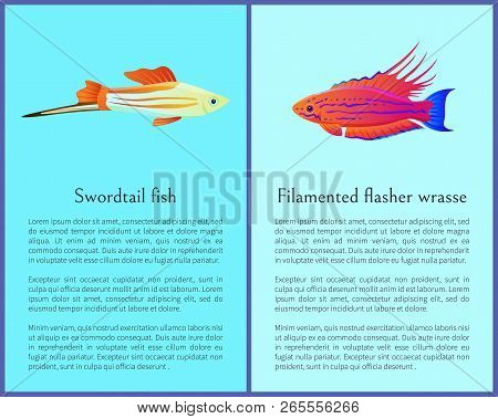 Filamented Flasher Wrasse And Swordtail Fish Icons. Freshwater Aquarium Pets Silhouette Image On Blu