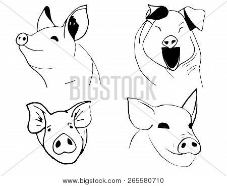 Set Of Different Muzzle Pigs. Simbol Of 2019 Year.