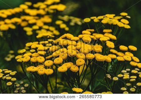 Tiny Yellow Flowers With Green Stems And Leaves In Spring