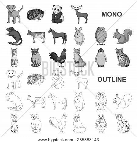Realistic Animals Monochrom Icons In Set Collection For Design. Wild And Domestic Animals Vector Sym