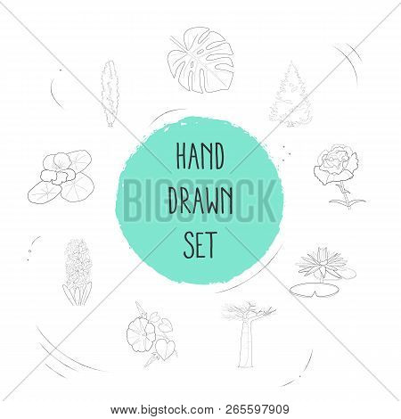 Set of botany icons line style symbols with baobab, tropical leaf, spruce and other icons for your web mobile app logo design. poster