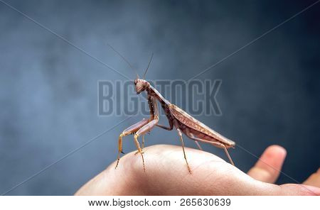 Insect hunter attacks. Mantis is a terrible monster of wildlife. Mantis in attack. poster
