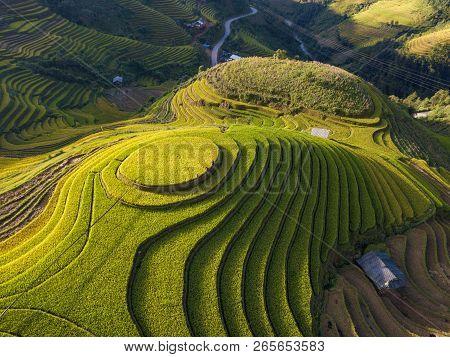 Vietnam Landscapes. Rice Fields On Terraced Of Mu Cang Chai, Yenbai, Vietnam. Royalty High-quality F
