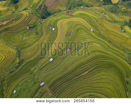 Aerial View Of Vietnam Landscapes. Rice Fields On Terraced Of Mu Cang Chai, Yenbai. Royalty High-qua
