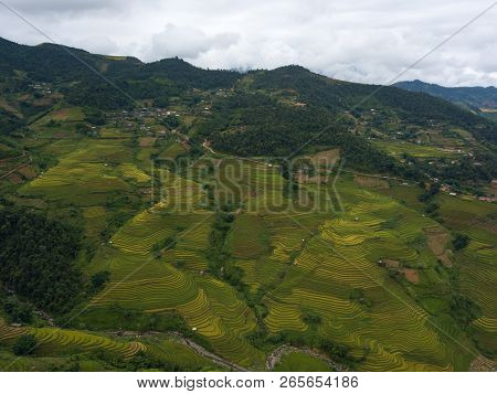 Vietnam Landscapes With Terraces Rice Field. Rice Fields On Terraced Of Mu Cang Chai, Yenbai. Royalt