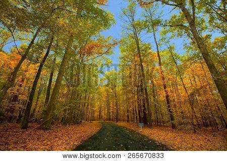 Beautiful autumn colors in the north carolina region