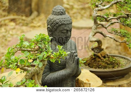 Buddha Statue With Bonsai Trees, Bonsai Tree Exhibition At Pune