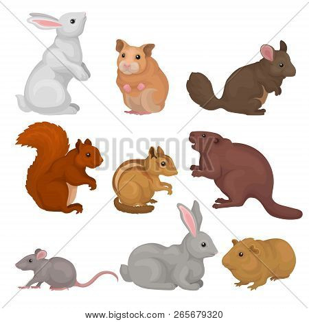 Cute Rodents Set, Small Wild And Domestic Animals Vector Illustration On A White Background