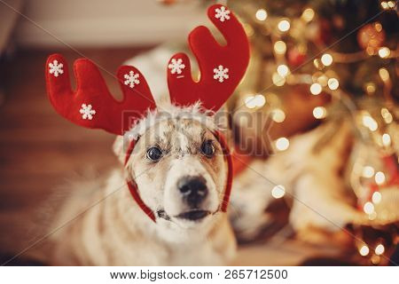 Cute Dog With Reindeer Antlers Sitting On Background Of Golden Beautiful Christmas Tree With Lights