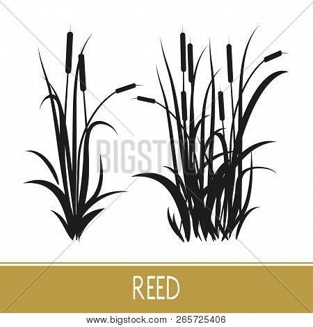 Sedge, Reed, Cane, Bulrush. Set. Black Silhouette On White Background.
