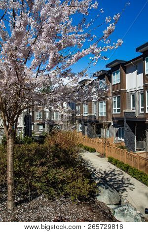 New Modern Low Rise Appartament Complex On A Sunny Spring Day With Blooming Sakura Trees.
