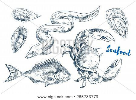 Edible Mussels And Oysters Monochrome Vector Illustration, Electric Eel And Large Squid And Crab. Se