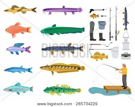 Fish Set And Fishing Tools Collection Color Card, Isolated On White Background Vector Illustration O