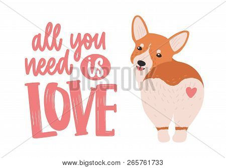 Cute Welsh Corgi With Heart On His Back And All You Need Is Love Ironic Slogan Or Phrase Handwritten