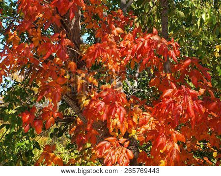 Patches Of Color Are Appearing Early With Vibrant Colors. It Could Be The Three Months Of Record Bre
